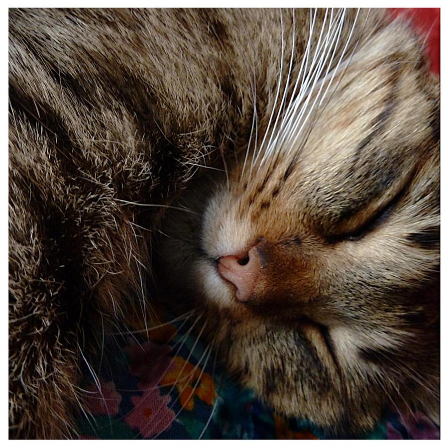 Sleeping honey 2 by jankolas