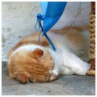 Skiathos cat by JankaLateckova
