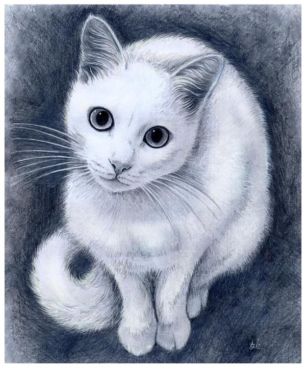 White kitty by jankolas
