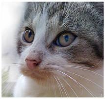 Kitten by JankaLateckova