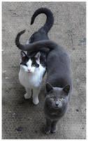 Cat's love by JankaLateckova