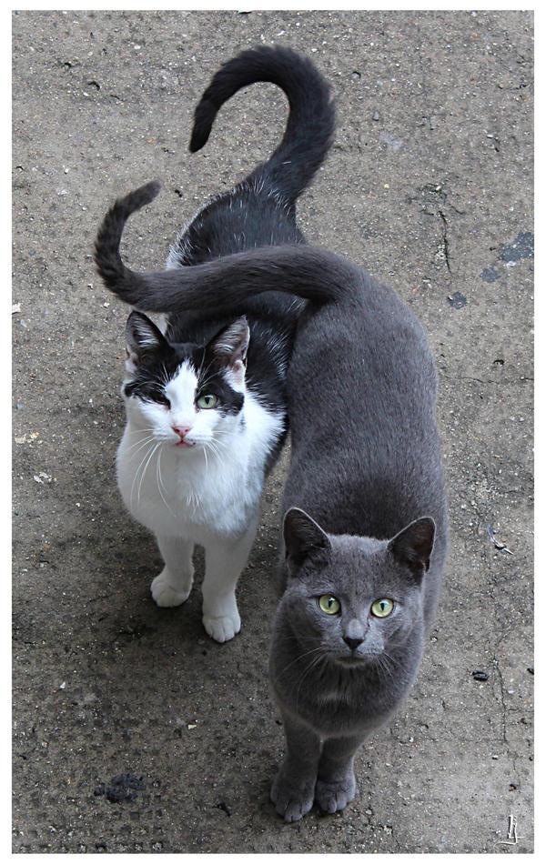 Cat's love by jankolas
