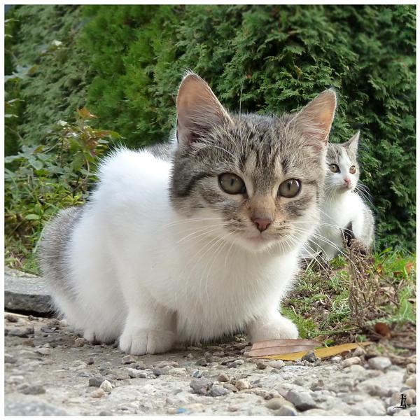 Kittens by jankolas