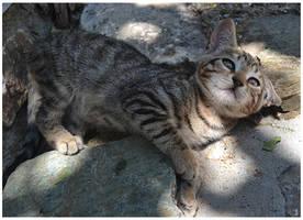Playful Kitten by JankaLateckova