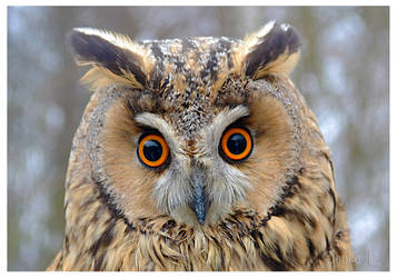 Owl for Elena by JankaLateckova