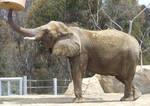 Elephant - Side 1