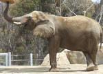 Elephant - Side 2