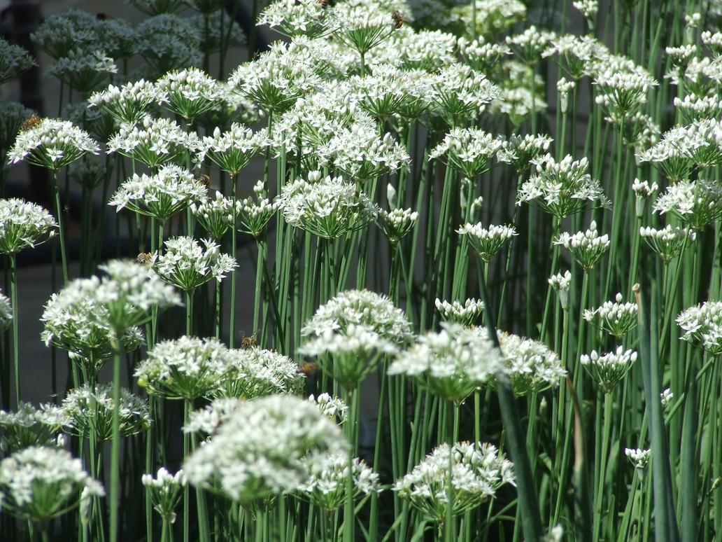 White Flower Plant 1 By Dtf Stock On Deviantart