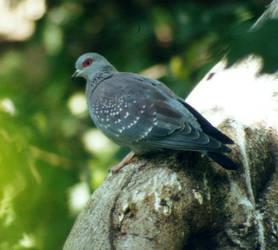 Stock - Dove