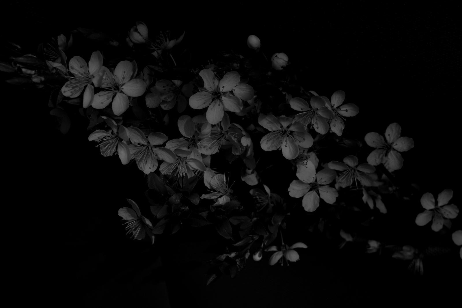silence by TihanaV