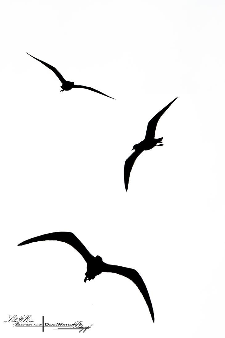 Bird Silhouette - Stock. by ElementaryDearWatson