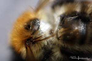The Texture Of A Bee. by ElementaryDearWatson