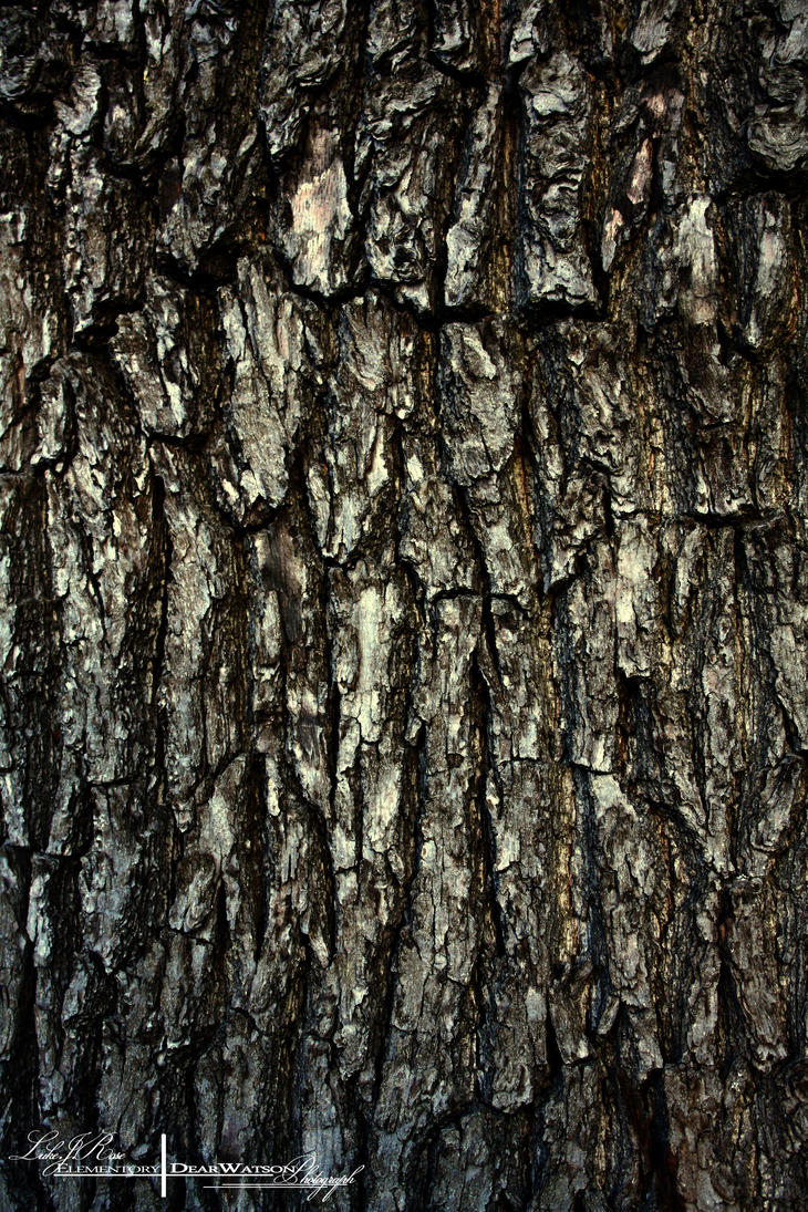 Tree Bark Texture and Stock Photography. by ElementaryDearWatson