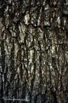 Tree Bark Texture and Stock Photography.