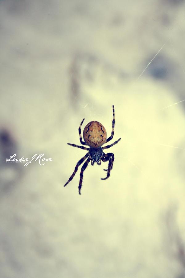 Incy Wincy Spider by ElementaryDearWatson