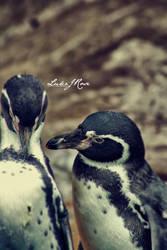 Sorrow Penguins