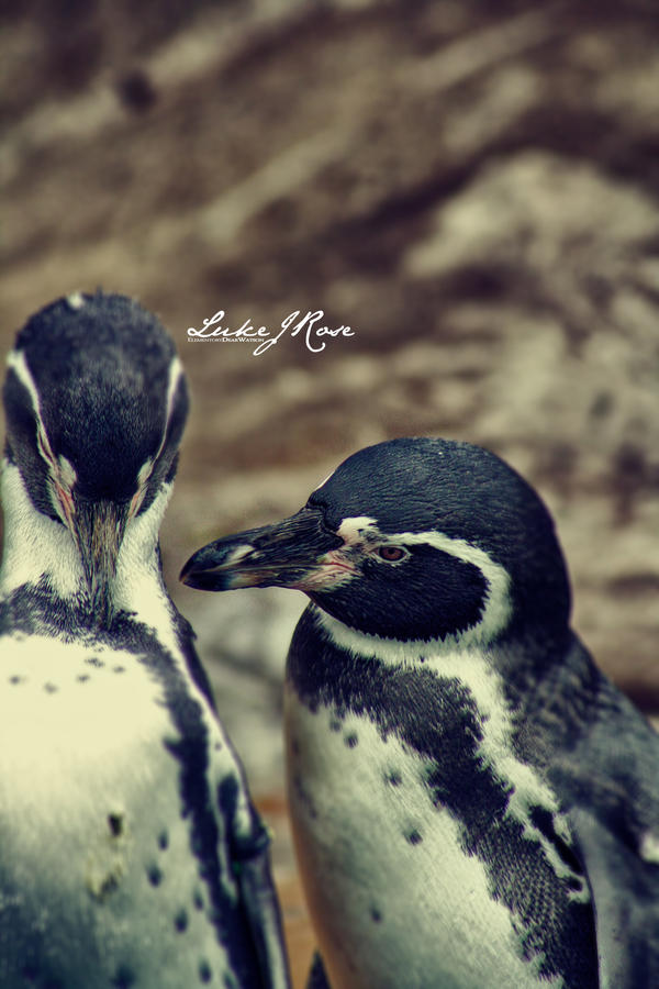 Sorrow Penguins by ElementaryDearWatson