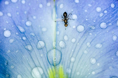 Bug roaming over the flower and raindrops by LordRobin3K