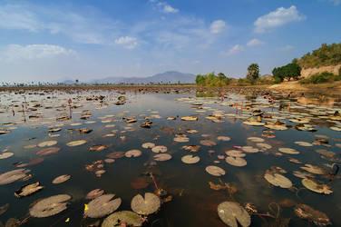 Waterlily Pond by LordRobin3K