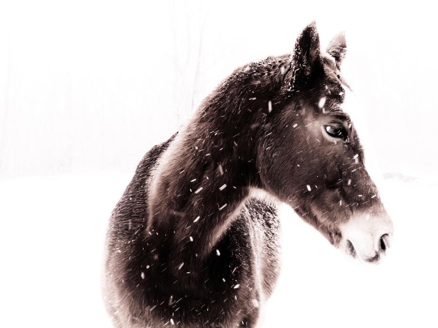 Wild Horse by PhotoAlterations
