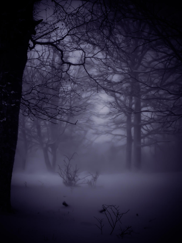 Beautiful Winter by PhotoAlterations