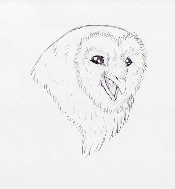 Barn Owl Sketch by Aydenna on DeviantArt