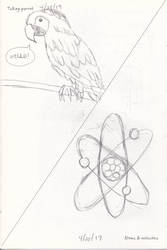 Talking Parrot and Atoms and Molecules