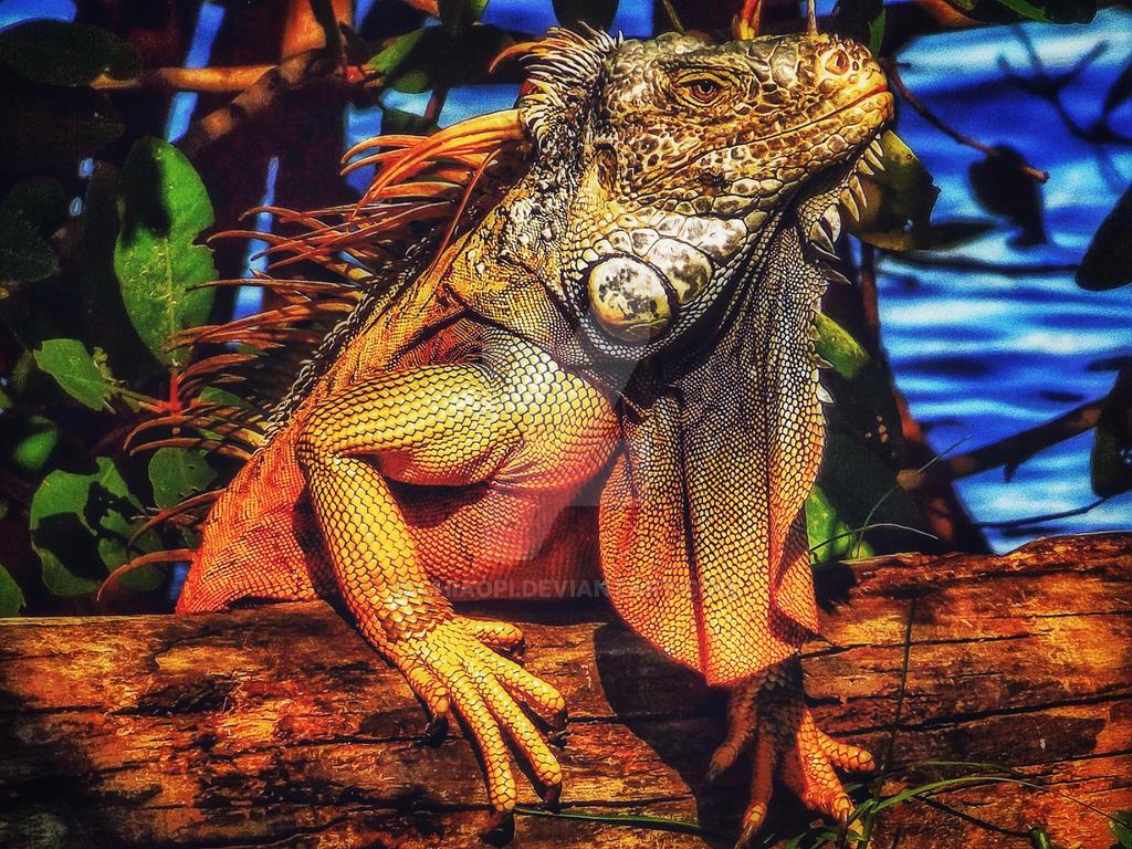 Iguana by chiaopi