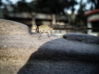 and A Dragonfly by Ayon-Azad