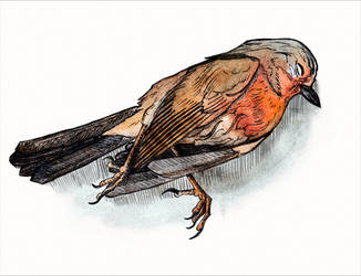 Dead bird (Inktober #2) by Sodachichan