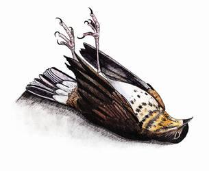 Dead bird (Inktober #4) by Sodachichan