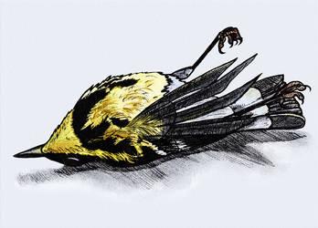 Dead bird (Inktober #5) by Sodachichan