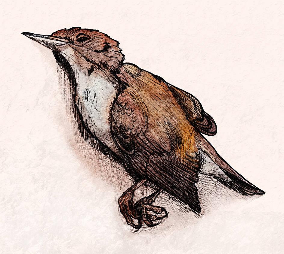 Dead bird (Inktober #6) by Sodachichan