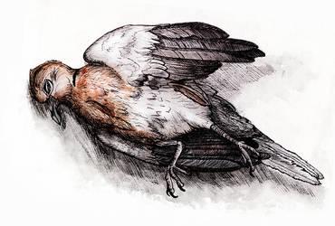 Dead bird (Inktober #7) by Sodachichan