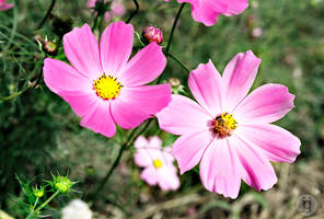 Flower Gestures by beveon