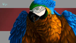 Blue-and-yellow macaw by Fidae