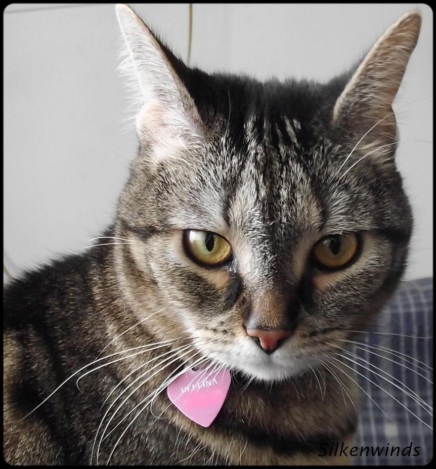 Kitty Cat by SilkenWinds