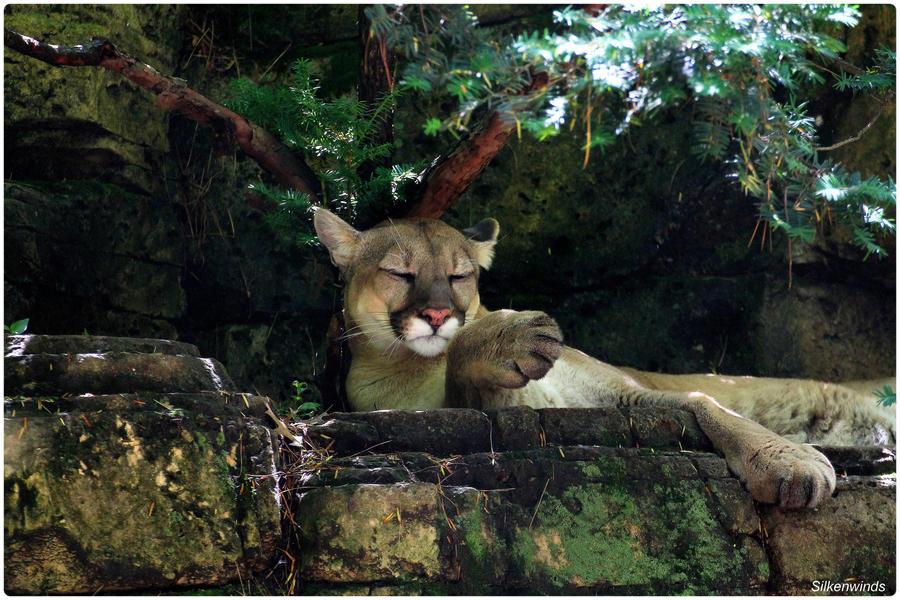 eskortepiker bergen cougar dating