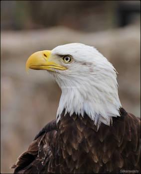 Eagle Portrait Studio 7