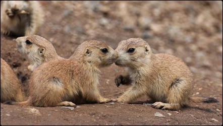 Prairie Babies 2