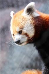 Sunny Panda