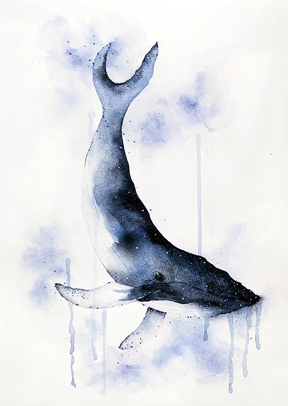 Whale Watercolor by teatimetomorrow