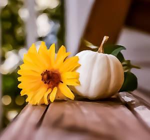 White Pumpkin and Flower