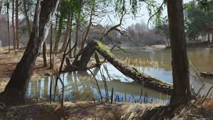swamp by maykrender