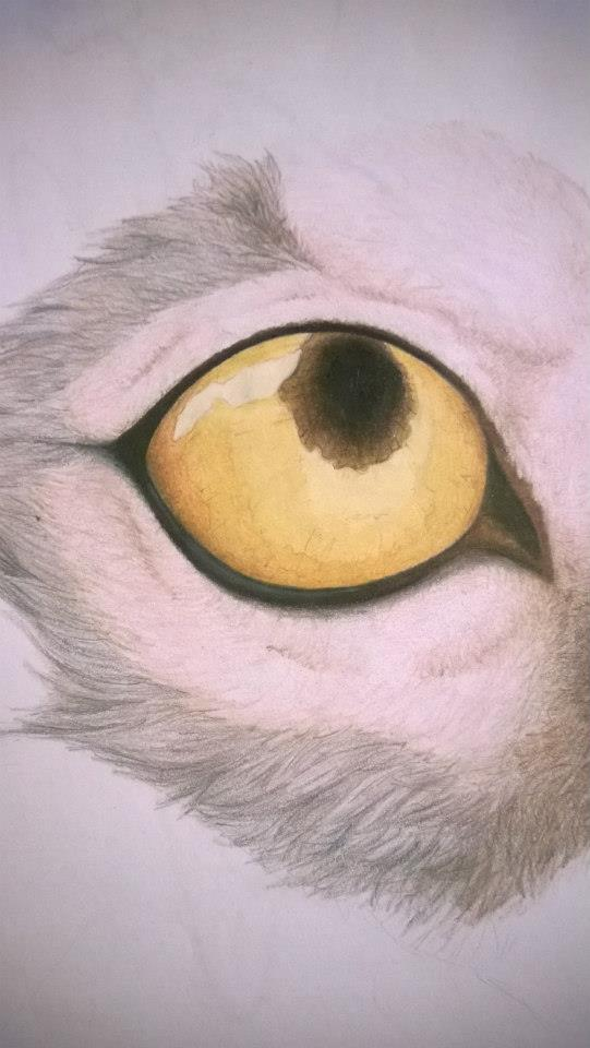 Wolf Eye by ArchRavn