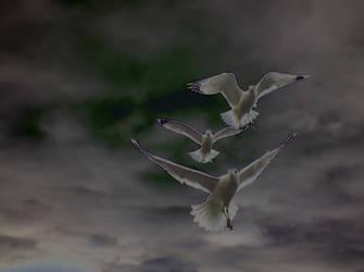 Triad of Seagulls. by Brentron