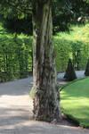 Tree trunk02