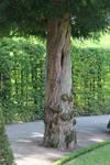 Tree trunk01