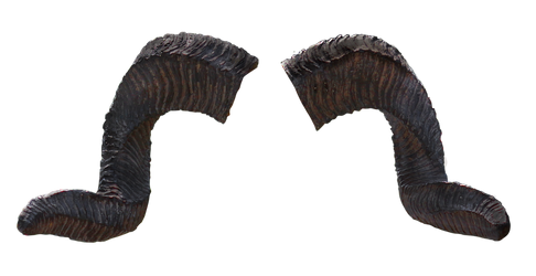 Horns_PNG