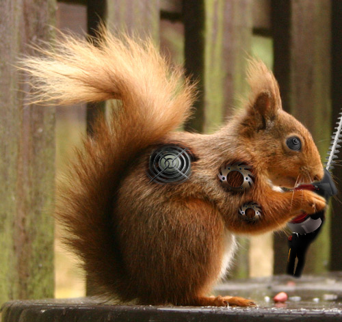 Squirrel In His Sights Dog Entranced Watching Squirrel Videos